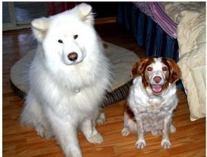 DuWhite Dog & Ms. Cassie