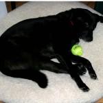 kayla - a tired dog!