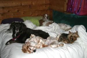 six dog night