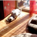 sunbathing at TBTB