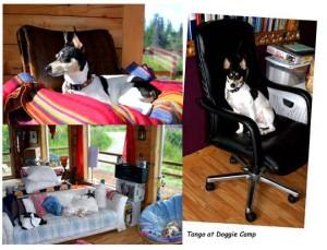 tango at dog camp